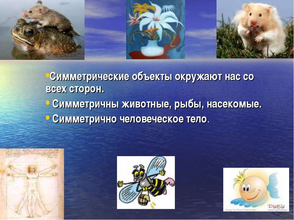 Симметрические объекты окружают нас со всех сторон. Симметричны животные, рыб...