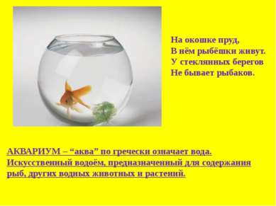 На окошке пруд, В нём рыбёшки живут. У стеклянных берегов Не бывает рыбаков. ...