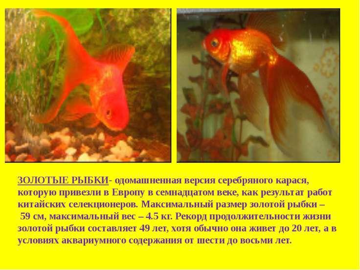 ловля рыбы в казани