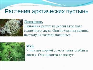 Растения арктических пустынь Лишайник. Лишайник растёт на деревья где мало со...