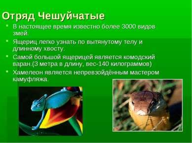 Отряд Чешуйчатые В настоящее время известно более 3000 видов змей. Ящериц лег...