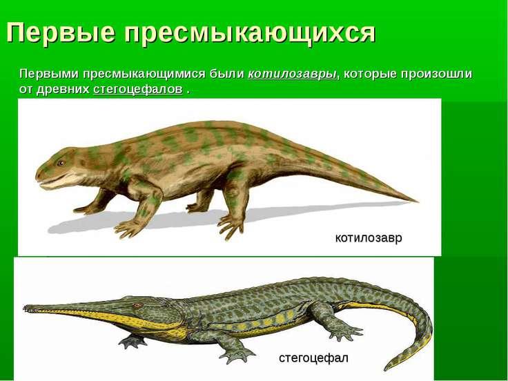 Первые пресмыкающихся Первыми пресмыкающимися были котилозавры, которые произ...