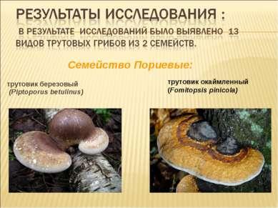трутовик березовый (Piptoporus betulinus) Cемейство Пориевые: трутовик окаймл...