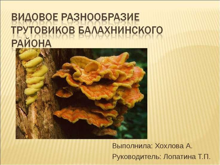 Выполнила: Хохлова А. Руководитель: Лопатина Т.П.