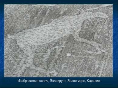 Изображение оленя, Залавруга, Белое море, Карелия.