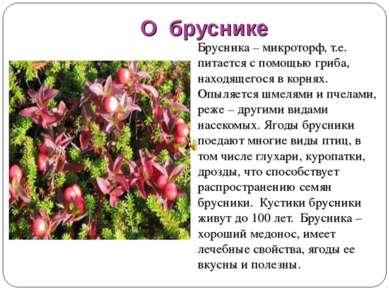 О бруснике Брусника – микроторф, т.е. питается с помощью гриба, находящегося ...