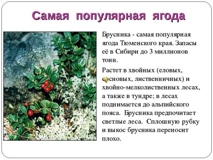 Самая популярная ягода Брусника - самая популярная ягода Тюменского края. Зап...