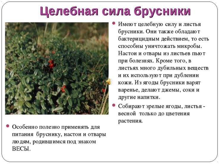Целебная сила брусники Особенно полезно применять для питания бруснику, наст...