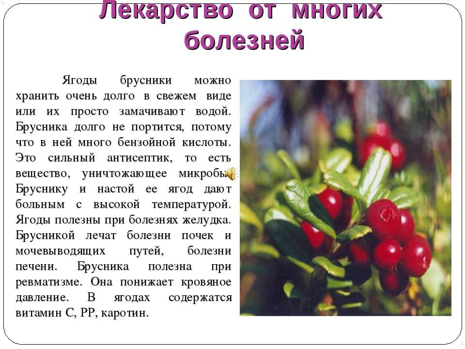 Брусника ягода фото и описание поражению
