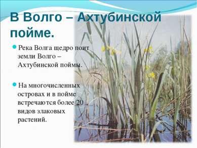 В Волго – Ахтубинской пойме. Река Волга щедро поит земли Волго –Ахтубинской п...