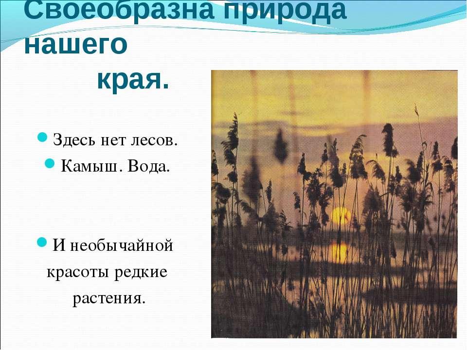 Своеобразна природа нашего края. Здесь нет лесов. Камыш. Вода. И необычайной ...