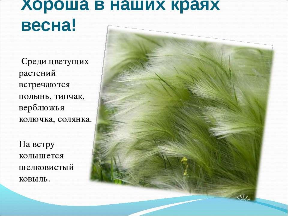 Хороша в наших краях весна! Среди цветущих растений встречаются полынь, типча...