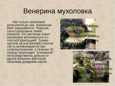 Венерина мухоловка Как только насекомое дотронется до них, половинки вмиг зак...