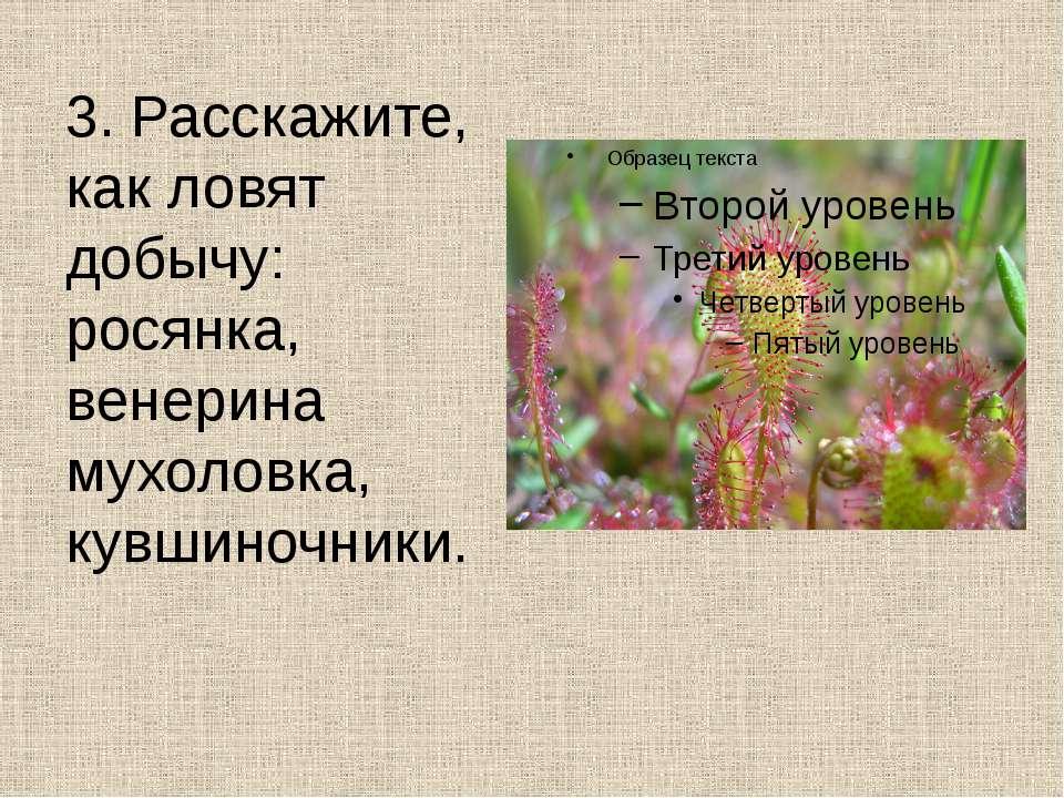 3. Расскажите, как ловят добычу: росянка, венерина мухоловка, кувшиночники.