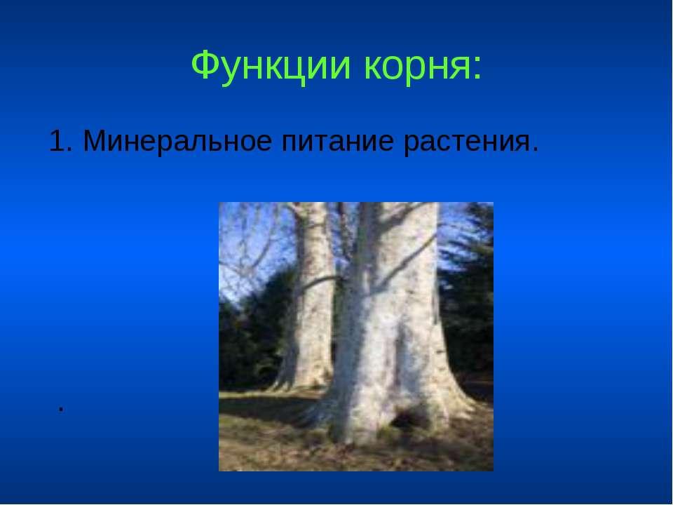 Функции корня: 1. Минеральное питание растения. .