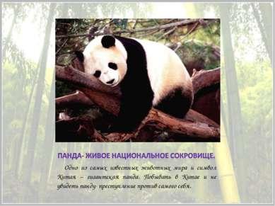 Одно из самых известных животных мира и символ Китая – гигантская панда. Побы...