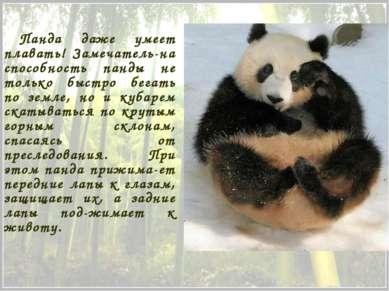 Панда даже умеет плавать! Замечатель-на способность панды не только быстро бе...