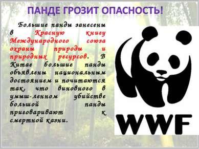 Большие панды занесены в Красную книгу Международного союза охраны природы и ...