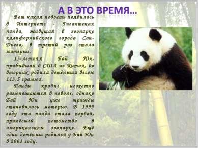 Вот какая новость появилась в Интернете - Гигантская панда, живущая в зоопарк...