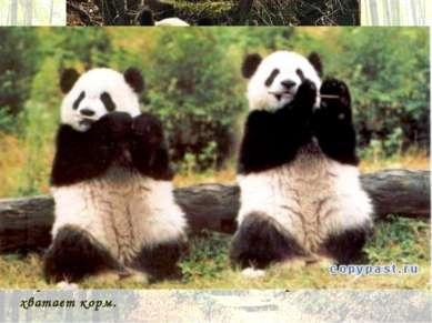 Весьма полезной отличительной чертой панды является подобие шестого большого ...