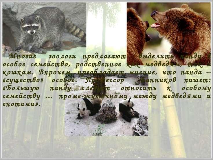 Многие зоологи предлагают выделить панду в особое семейство, родственное как ...