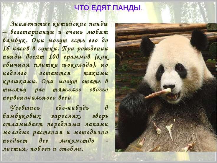 Знаменитые китайские панды – вегетарианцы и очень любят бамбук. Они могут ест...