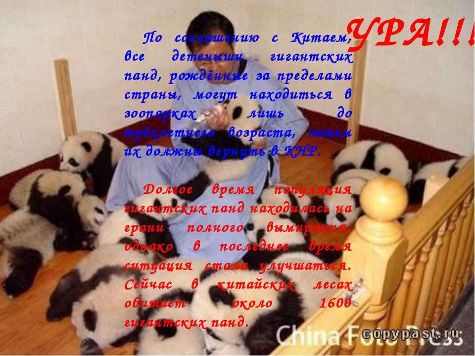 По соглашению с Китаем, все детеныши гигантских панд, рождённые за пределами ...