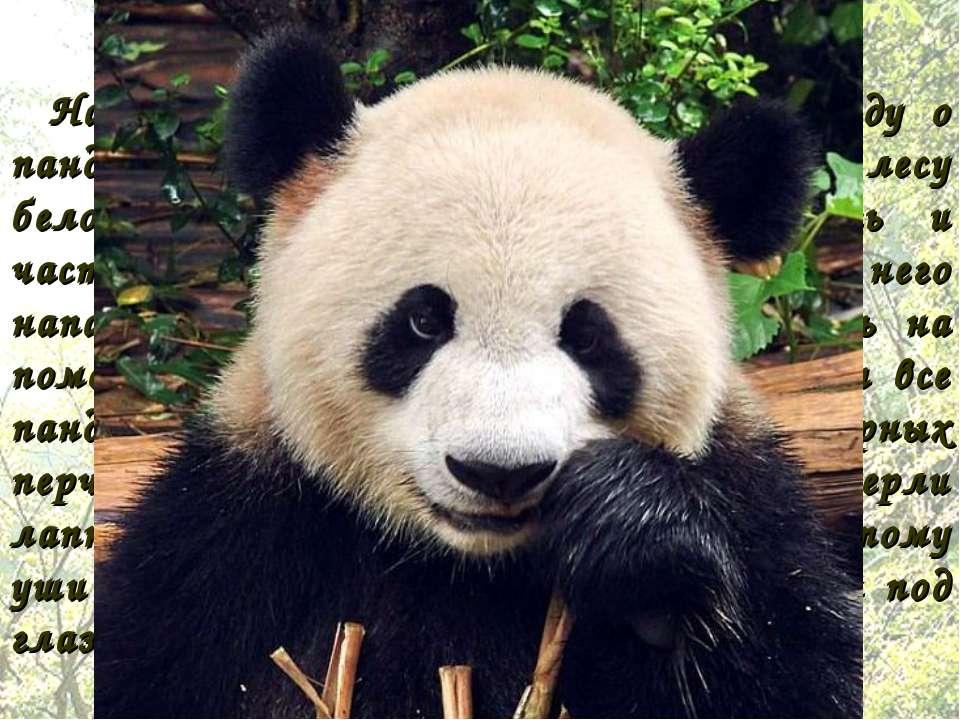 На Тибете рассказывают такую легенду о панде. Однажды девочка встретила в лес...