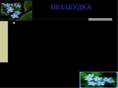 НЕЗАБУДКА Однажды Флора спустилась на землю и стала одаривать цветы именами. ...