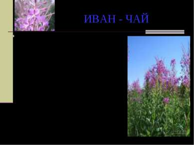 ИВАН - ЧАЙ Жил в одной русской местности паренек Иван. Любил он ходить в крас...