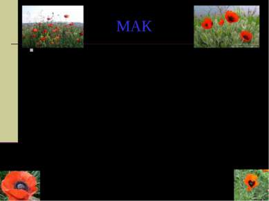 МАК Когда Господь создал землю, животных и растения, все были счастливы, кром...