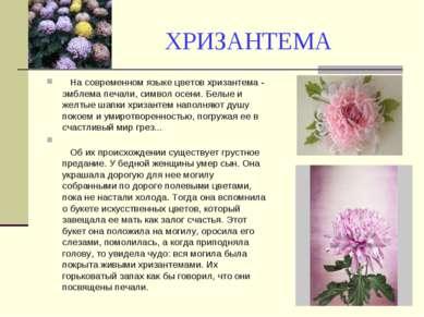 ХРИЗАНТЕМА На современном языке цветов хризантема - эмблема печали, символ ос...