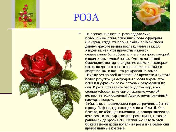 РОЗА По словам Анакреона, роза родилась из белоснежной пены, покрывшей тело А...