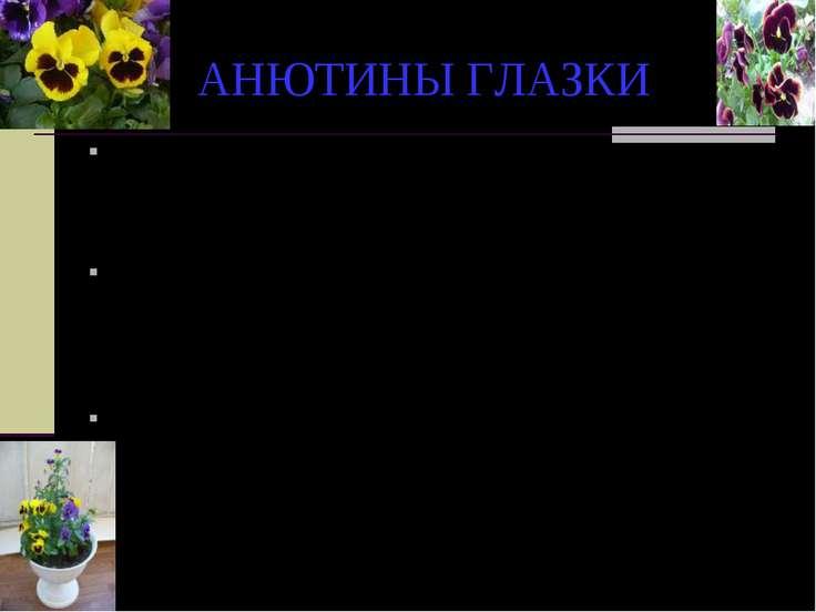 АНЮТИНЫ ГЛАЗКИ По русской легенде, в трехцветных лепестках анютиных глазок от...