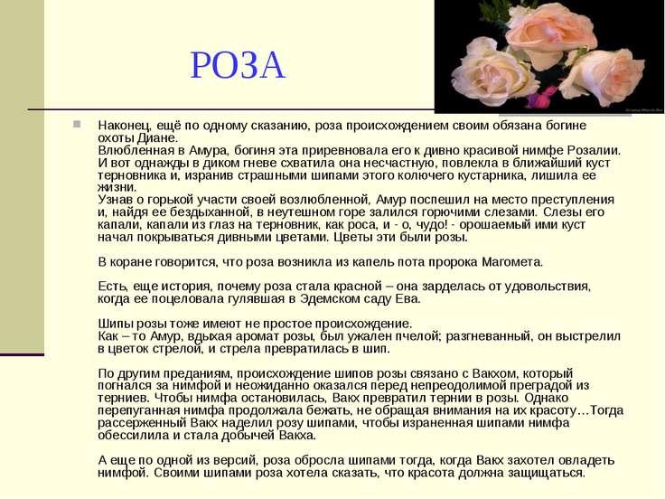 РОЗА Наконец, ещё по одному сказанию, роза происхождением своим обязана богин...