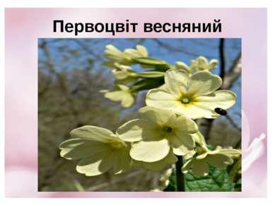 Первоцвіт весняний
