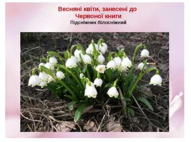 Весняні квіти, занесені до Червоної книги Підсніжник білосніжний
