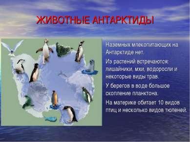ЖИВОТНЫЕ АНТАРКТИДЫ Наземных млекопитающих на Антарктиде нет. Из растений вст...