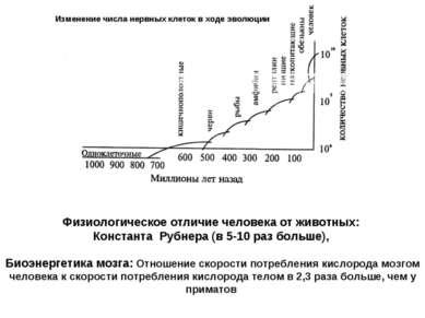 Изменение числа нервных клеток в ходе эволюции Физиологическое отличие челове...