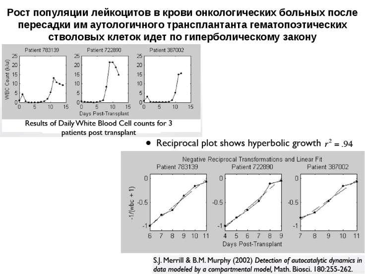 Рост популяции лейкоцитов в крови онкологических больных после пересадки им а...