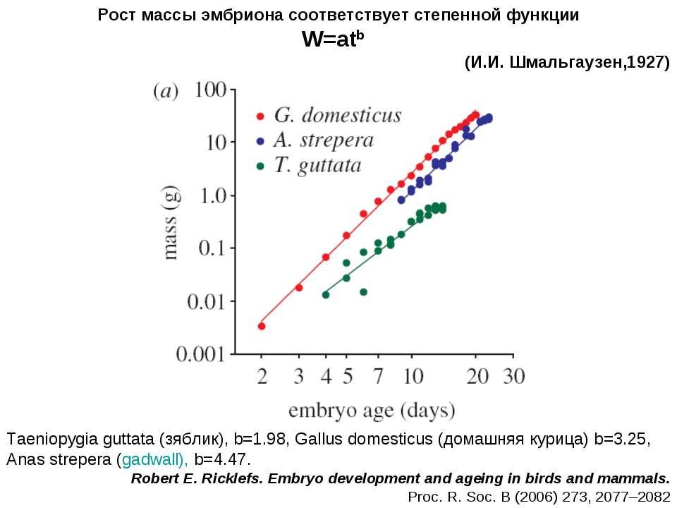 Taeniopygia guttata (зяблик), b=1.98, Gallus domesticus (домашняя курица) b=3...