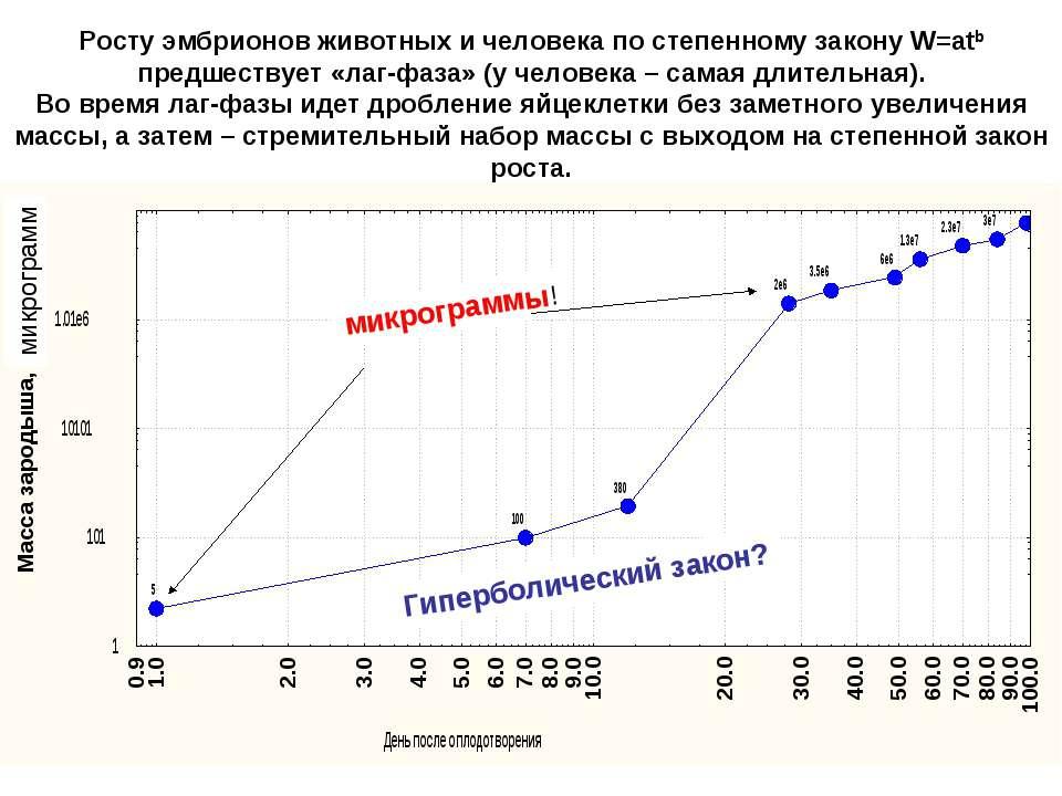 Росту эмбрионов животных и человека по степенному закону W=atb предшествует «...
