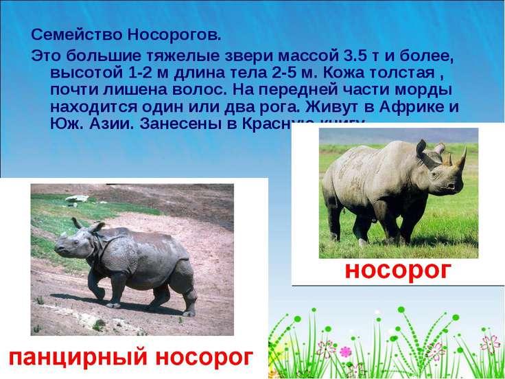 Семейство Носорогов. Это большие тяжелые звери массой 3.5 т и более, высотой ...