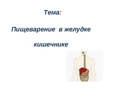 Тема: Пищеварение в желудке кишечнике