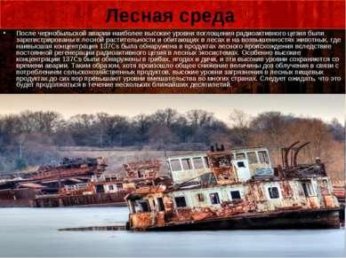 Лесная среда После чернобыльской аварии наиболее высокие уровни поглощения ра...
