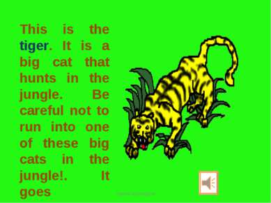 This is the tiger. It is a big cat that hunts in the jungle. Be careful not t...