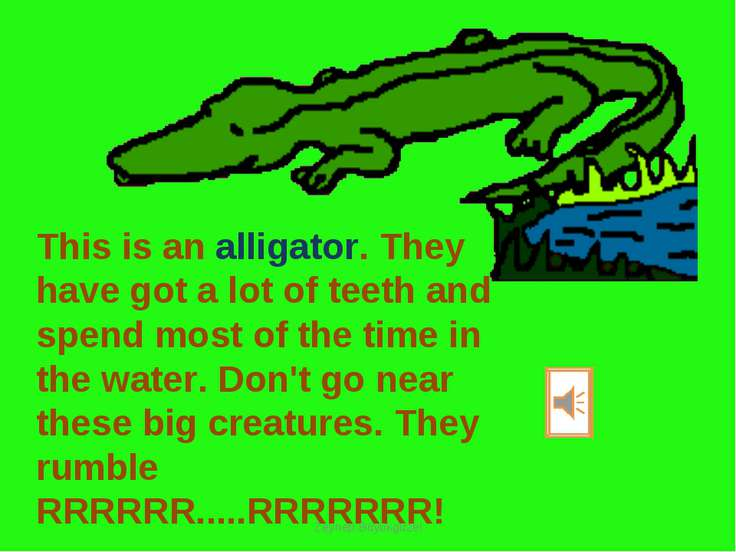 This is an alligator. They have got a lot of teeth and spend most of the time...