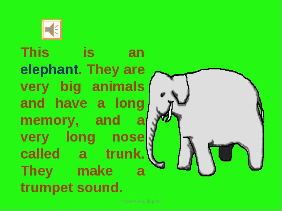 This is an elephant. They are very big animals and have a long memory, and a ...