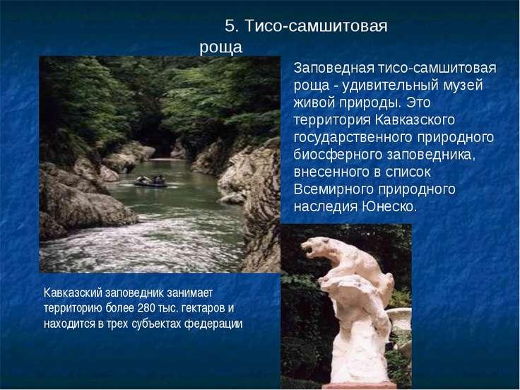 5. Тисо-самшитовая роща Заповедная тисо-самшитовая роща - удивительный музей ...