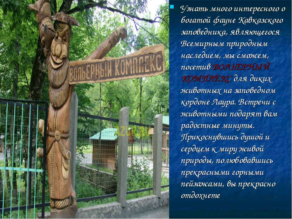 Узнать много интересного о богатой фауне Кавказского заповедника, являющегося...